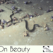 On Beauty | INTERNATIONAL PHOTOGRAPHIC CALL FOR ENTRIES at C4FAP