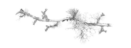 Lichen on Hawthorne Elan Valley 2014 | Louisa Crispin