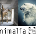 Animalia | INTERNATIONAL PHOTO CALL FOR ENTRY